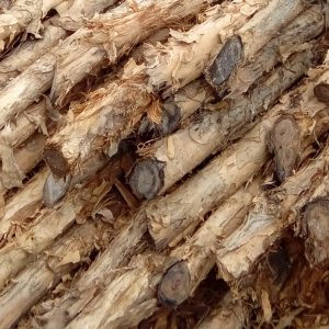 kayu dolken gelam murah